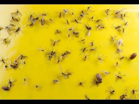 nouveau plus de moustiques plus d insectes dans votre maison anti moustique fait maison. Black Bedroom Furniture Sets. Home Design Ideas