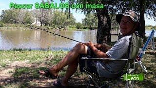 Pescar SABALOS con masa / Villa Paranacito