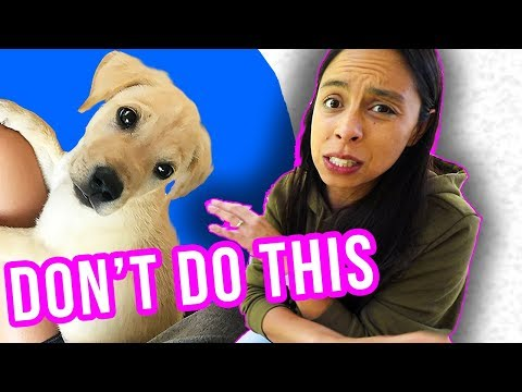 Prepare for Puppy's FIRST Day Home:  What NOT To Do!!