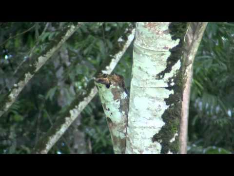 Birds & More: Trinidad & Tobago