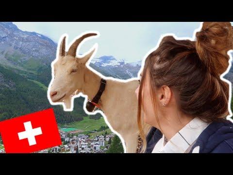 DES CHEVRES EN SUISSE ?! - Vlog à Saas Fee
