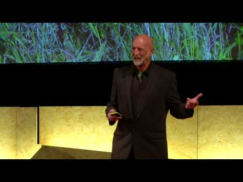 Life is Art | David Alan Harvey | TEDxVerona