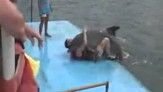 Дельфин насилует человека!
