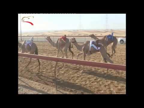 تأهيل اللقايا – 4 كلم– سيف العرب  24-10-2014 صباحاً ش9 جدارة لعلي حويل مهدي آل عامر