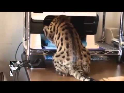 Прикольные картинки кошек и собак с надписями ! »