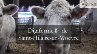 Une balance connectée pour peser les jeunes bovins - ARVALIS-infos.fr