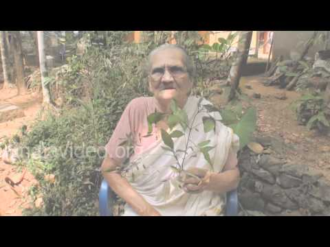 Folk medicine for arthritis and rheumatism - Vitex negundo