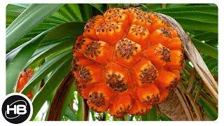 ФРУКТЫ. 10 самых необычных, съедобных экзотических фруктов