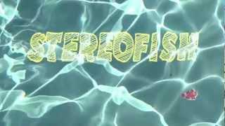 Trailer des Stereofish à la Flèche d