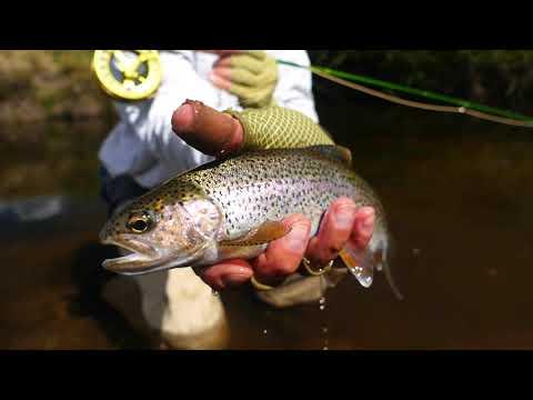 Pesca con Mosca en Córdoba, parte 3