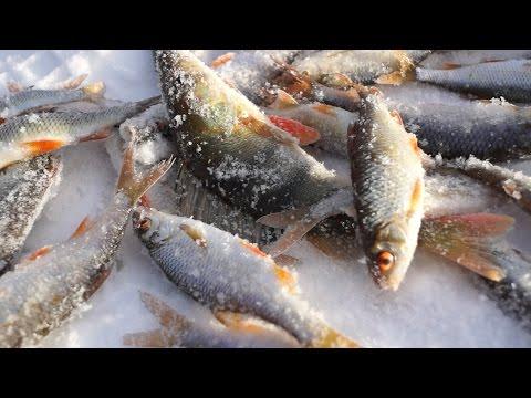 Зимняя ловля плотвы на мормышку