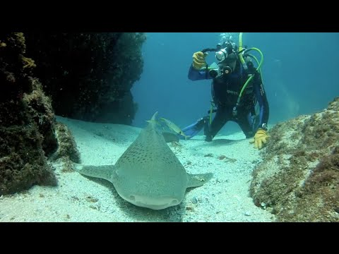 A dive with bill silvester the man who put byron bay on - Dive byron bay ...