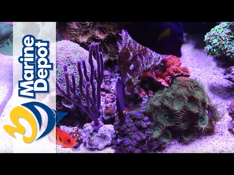 Marine Depot Featured Tank: Mike's 120 Gallon Custom Mixed R