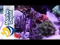 Marine Depot Featured Tank: Mike's 120 Gallon Custom Mixed Reef Tank