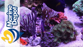 Marine Depot Featured Tank: Mike's 120 Gallon Custom Mixed Reef Tank