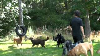 Victoria Bc Dog Boarding | Ben Kersen & The Wonderdogs