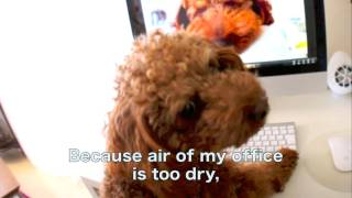 Toy Poodle reviews Desktop Humidifier