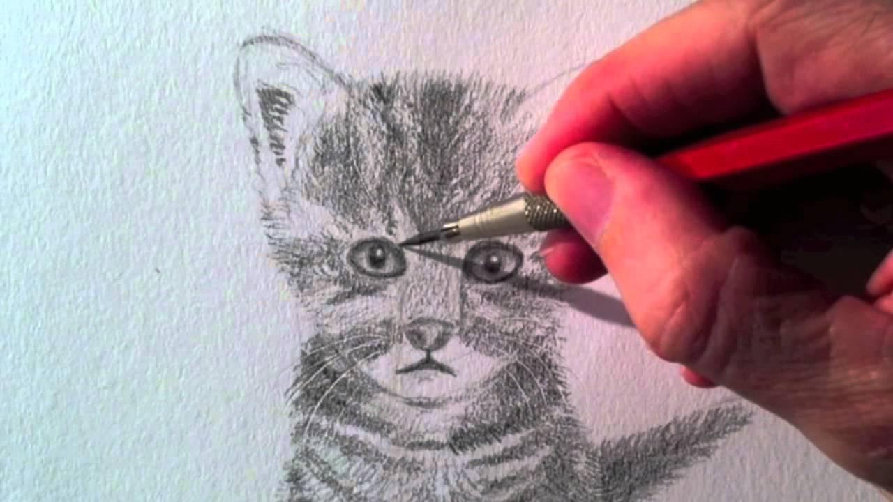 Como dibujar un Gato realista a lápiz - Arte Divierte - YouTube