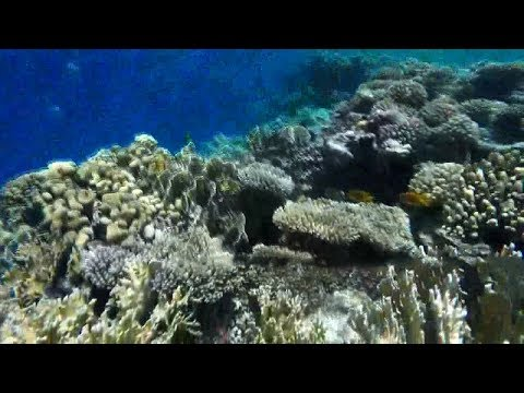 Coral Reefs In Bahrain Coast Heading Towards Extinction: Gulf Time
