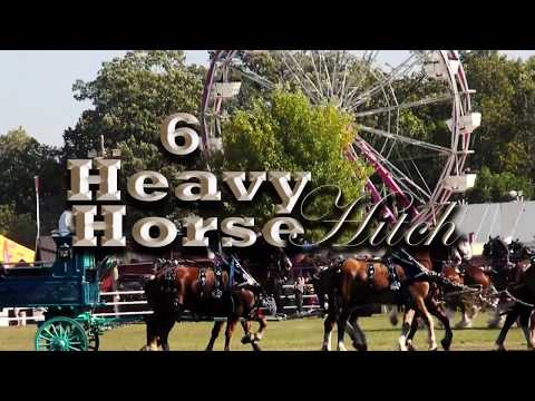 6 Heavy Horse Hitch with Bonus 8 Hitch - Belgians, Clydesdales, Percherons