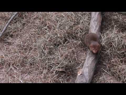 Our visit to the Helsinki Zoo - Korkeasaari