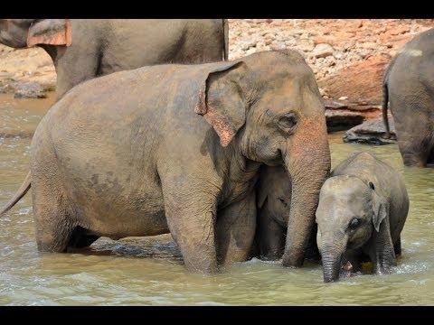 Les animaux du Sri Lanka thumbnail
