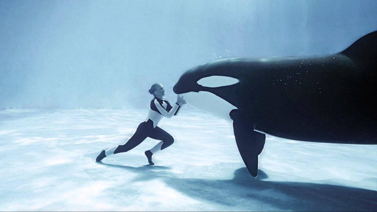 Accident : Elle Se Fait écraser Le Bras Par Un Orque De 700 Kg à L'Aqua-center De Chicago