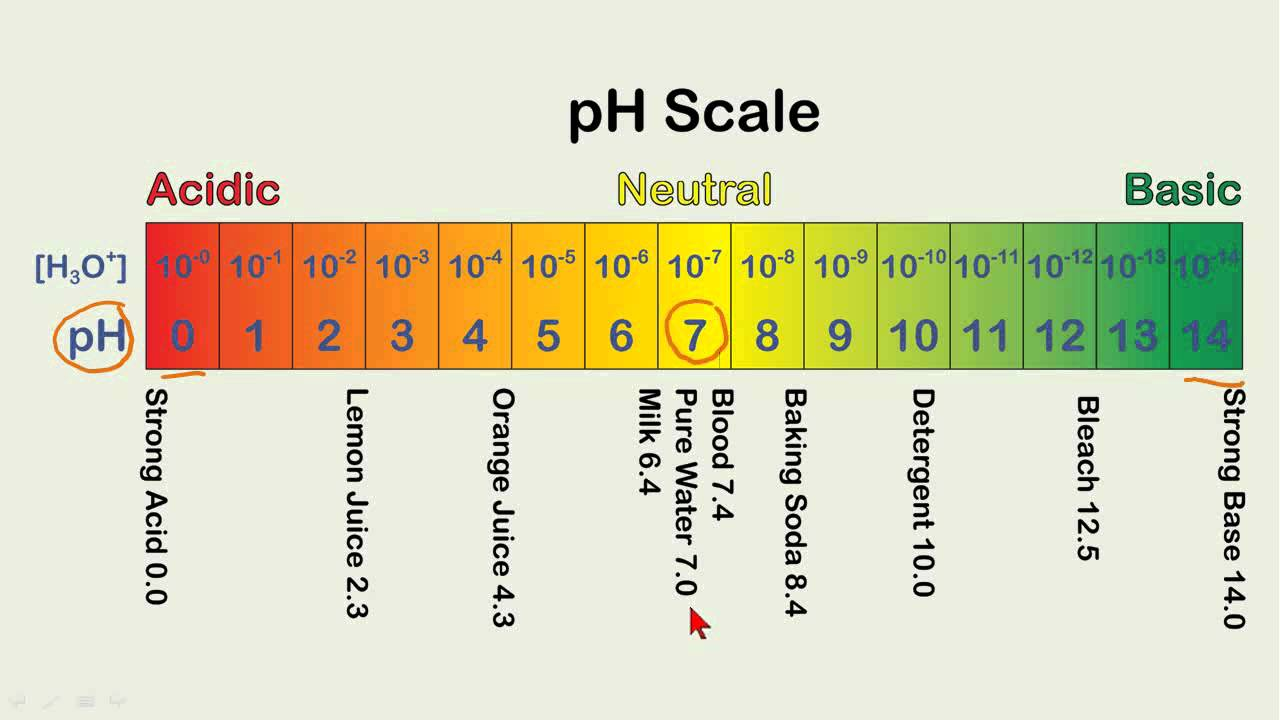 Calculating pH Values - YouTube for Ph Scale Acids And Bases  110yll