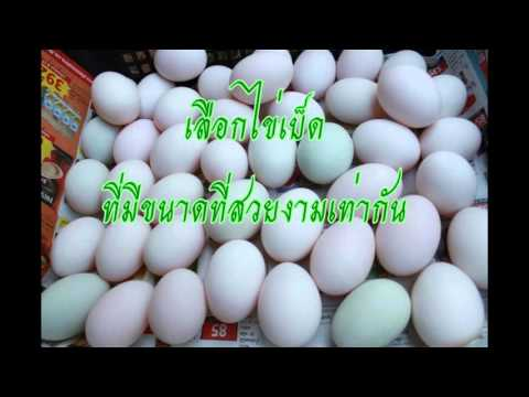 ขั้นตอนวิธีการทำไข่เค็ม (กลุ่ม อโดโบ้ (Adobo))