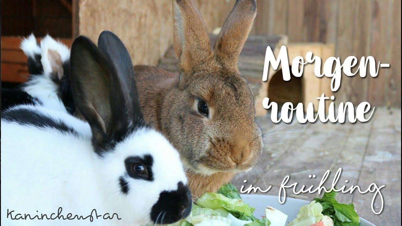 MORGENROUTINE im Frühling 🌻🐰 bei den Kaninchen   Kaninchenstar