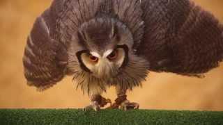 FOCUS Online vs. Transformer-Owl