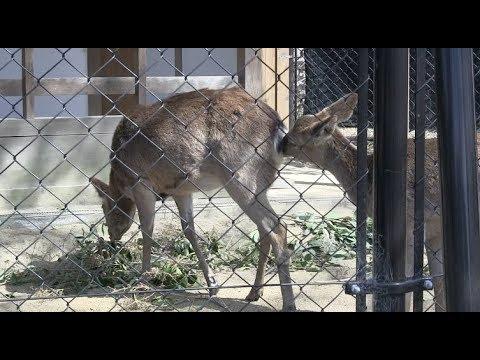 京都市動物園 丹頂鶴と本州鹿 Kyoto City Zoo Drum Top Crane and Honshu Deer