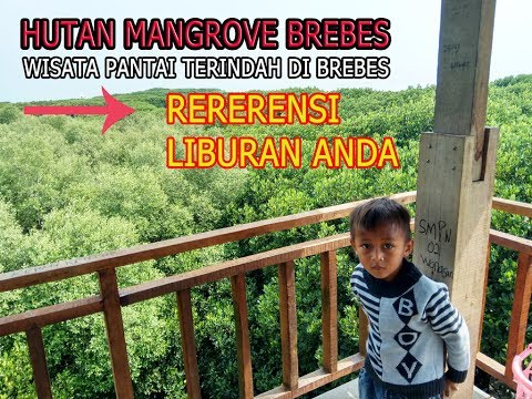 hutan-mangrove-brebes-jawa-tengah-[referensi-liburan-terbaik]