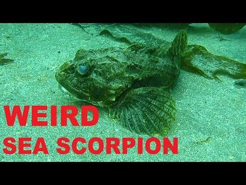 WEIRD SEA SCORPION