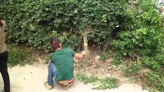 CƯỚP ĐẤT GIỮA BAN NGÀY TẠI HÀ NỘI-ĐÔNG ANH 13/4/2012 (PHAN 6)