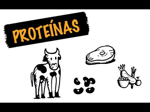 hqdefault - Proteína Animal e Vegetal: Qual a melhor?