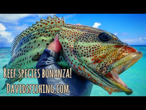 Fly Fishing Maldives Reef Species Slam!