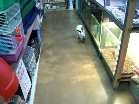 rabbit---very-friendly