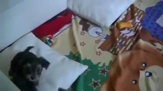 Как приучить щенка не гадить где попало Приколы с собаками