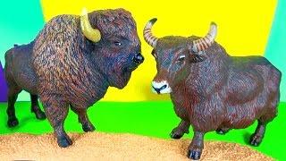 7  Wild Animals Kids Toy Collection Bison Yak Gnu Wildebeest Buffaloes