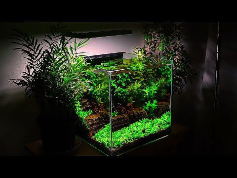 Small Planted Tank | Betta fish and  Relaxation