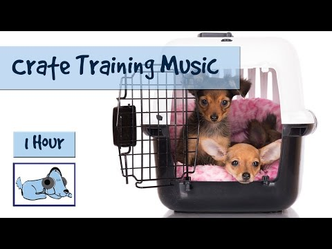 Crate Training Music - Music to Help Calm and Relax Your Dog During Crate Training 🐶 #CRATE02