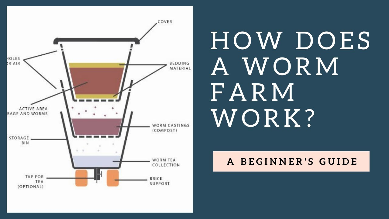 How Does a Worm Farm Work Plus Tips - YouTube