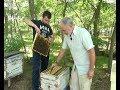 Від хобі до успішного медового бізнесу. На Херсонщині розводять племінних бджіл