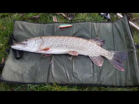 River Weaver In Winsford Cheshire Pike Fishing 5 11 2014
