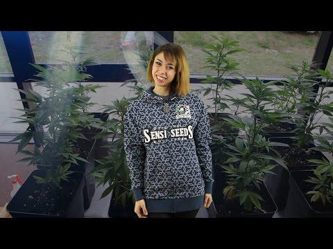 "Marihuana Television News #43 - Especial GIRA LATINA ""Expos Cannábicas"" Argetina, Chile y Uruguay"