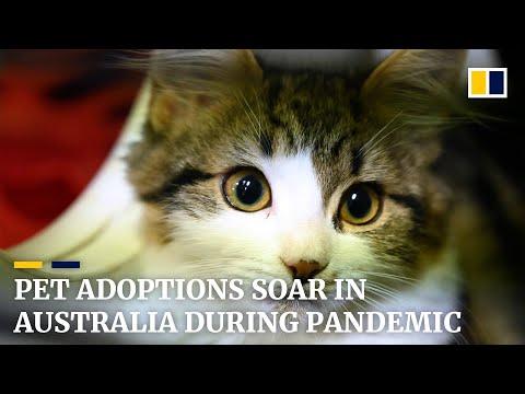 Pet Adoptions Soar In Australia During Covid-19 Shutdown