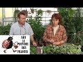 chaine de jardin: Peperomia obtusifolia: Comment arroser et  Bouturer: Plante verte