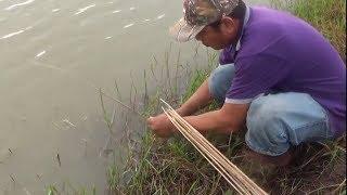CĂM CÂU CÁ LÓC BẰNG MỒI NHÁI | FISHING | RA ĐỒNG TẬP 73