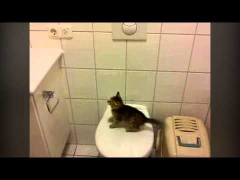 Epic Kitten Jump Fail! Epic Cat Video!